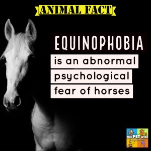 Equinophobia - Fear of Horses