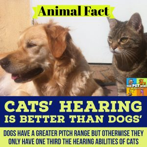 dogs cats hearing