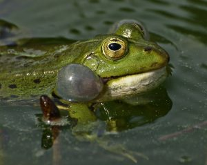 Safe Water For Frogs And Toads The Pet Wiki