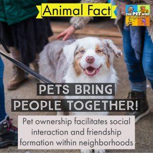 pets friendship social