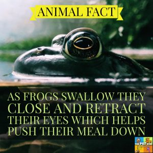 frogs eat pray infographic