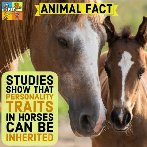 personality traits in horses inherited