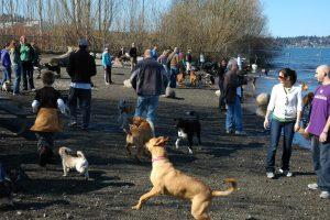 dogs off-leash