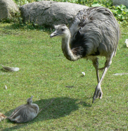 Rhea dad with son