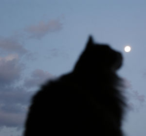 Cat Under the Moon