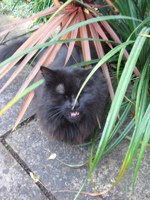 Cat Sneeze