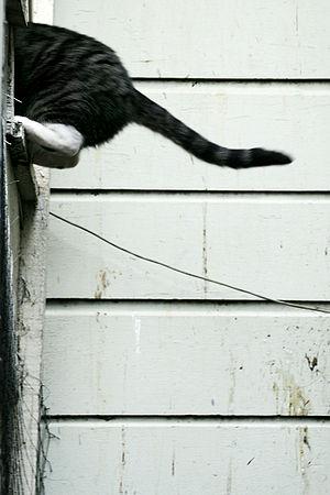 Cat Balance