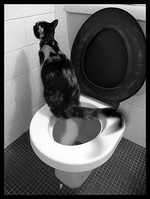 Cat using the toilet