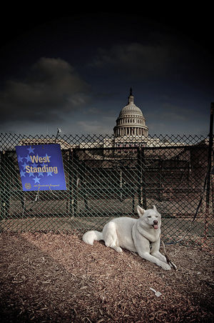 Dog at the Capitol