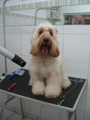Grooming Aids For Dogs The Pet Wiki