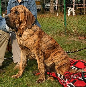 Fila Brasileiro