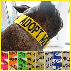 Message Dog Collar