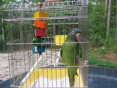 Bird Cage Outside
