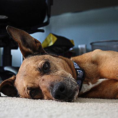 Bored dog.jpg