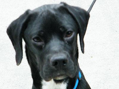 Canine Distemper Survivor