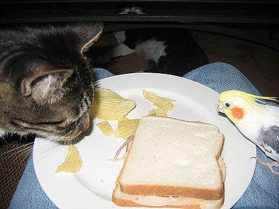 Cat and bird sharing a sandwich