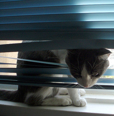 Cat Blinds
