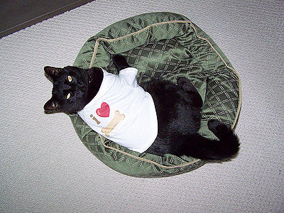 Cat wearing Clothes
