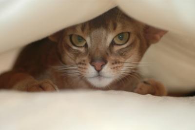 Cat Hide