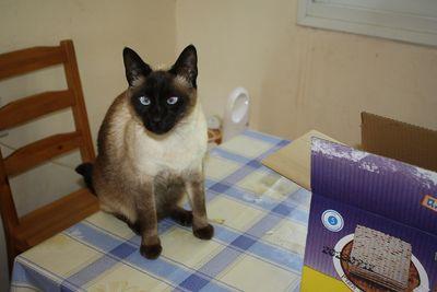 Cat Matzah