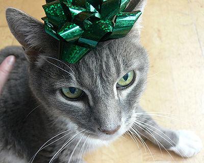Cat Present?