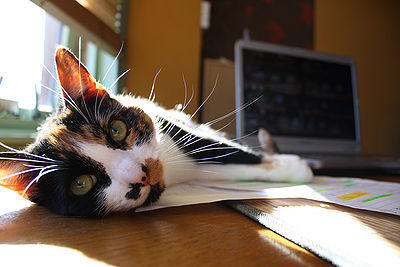 Cat Wishers