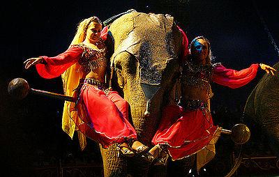 Circus Elephat