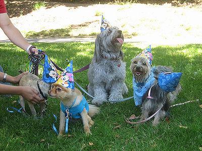 Pet Birthdays