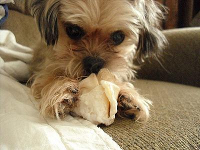 Dog Chew
