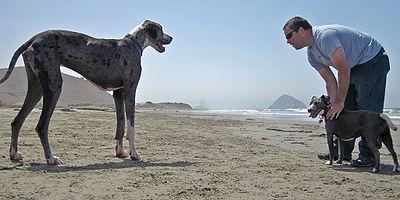 Dog Introduction