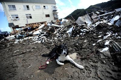 Dog Japan Tsunami