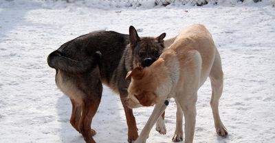 Dog Park Bite