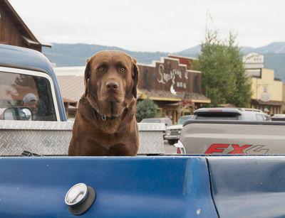 Dog Pickup