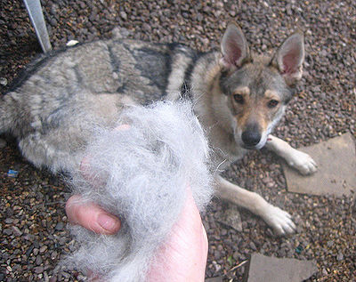 Dog Shedding