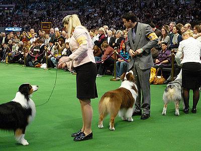 Westminster Dog Show  Judges