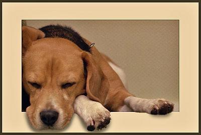 Snoring Dog