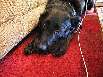 Dog Stress