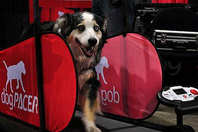 Dog Treadmill