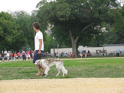 Dog Walk Washington DC
