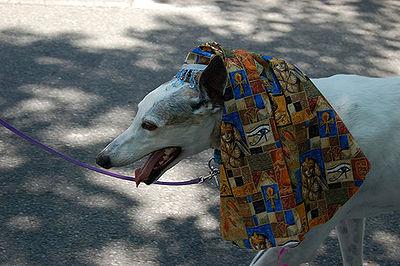 Egyptian Dog