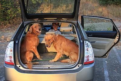 Geocaching Dogs
