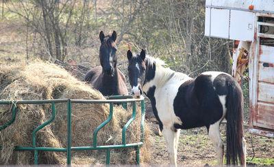 Horse Hay