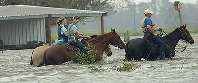 Horses in a Hurricane