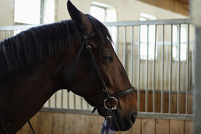 how to take horse dildo
