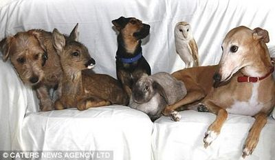 Jasmine the Dog and Friends