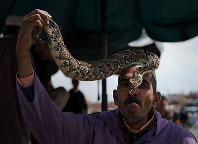 Kiss Snake
