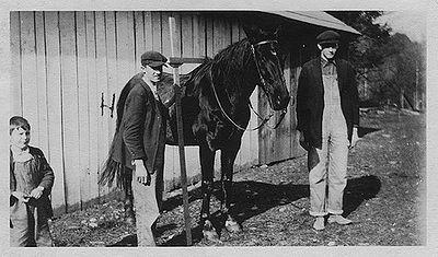 Measuring a horse