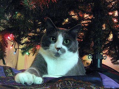 Polydactyl Hemingway Cats