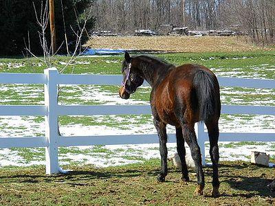 Rescue Horse.jpg