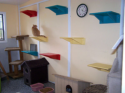 Room At Purrs And Paws For FIV and FeLV Cats
